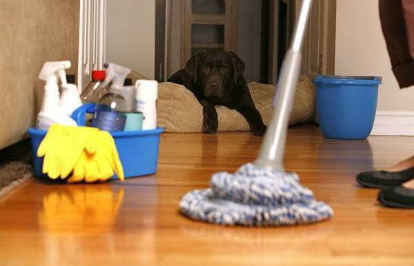 Clarkston MI Cleaning Service